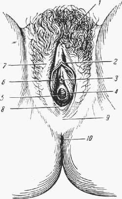Видео показывает на себе строение половых органов — img 14
